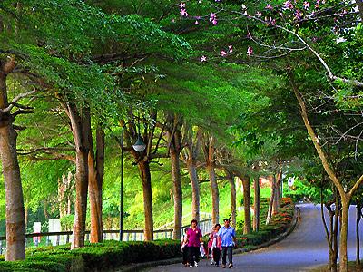自然森林生态,湖光山色的埤畔美景,是她最大的卖点.